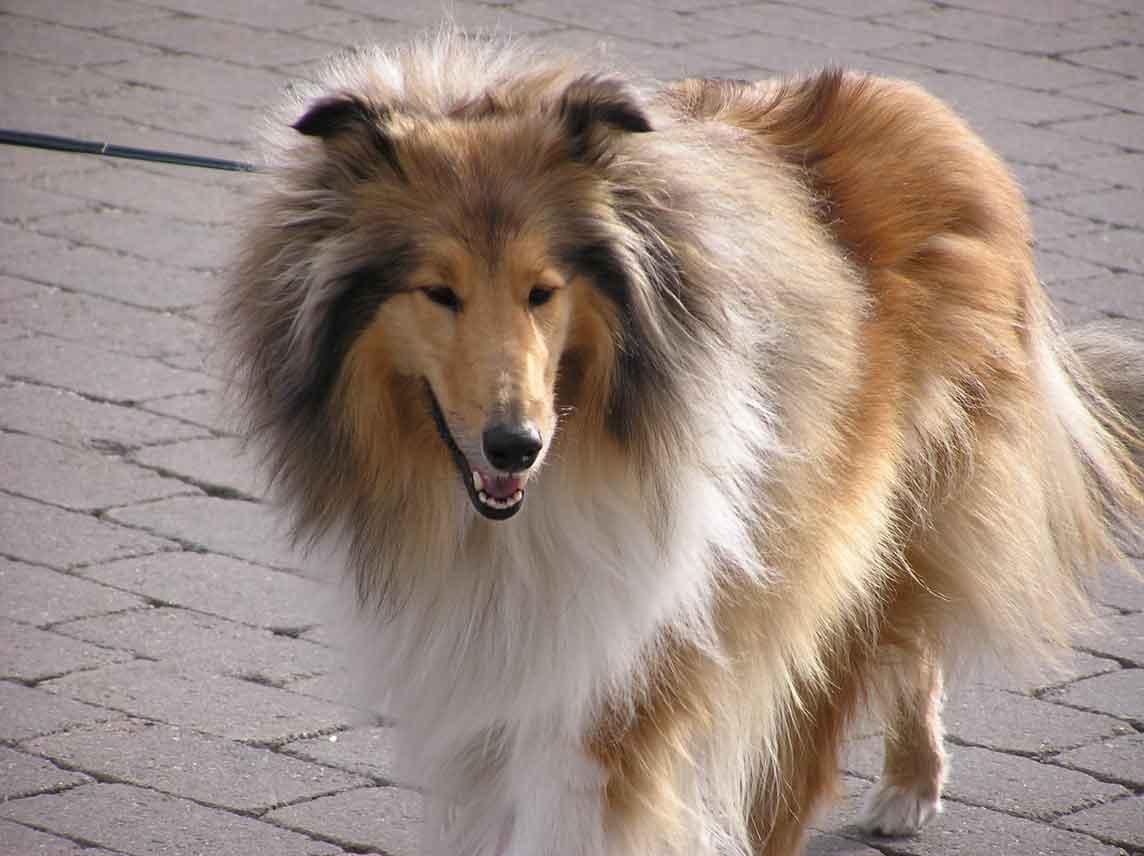 Rockhound's Beryl